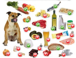 Чего нельзя и что можно давать есть собаке